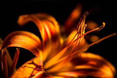 Floral 43 by robertllynch