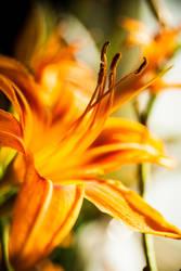 Floral 44 by robertllynch