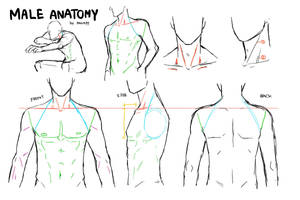 MALE ANATOMY by kanapy-art