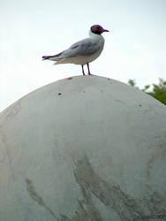 Big egg by stratbrat