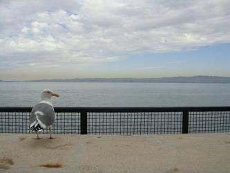 Seagull from Alcatraz by kate-takako