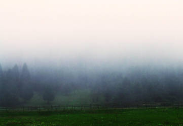 Forest in the Fog by queely