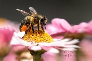 Little Pollen carrier by GJ-Vernon