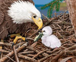 BALD EAGLE FATHER'S DAY CARD by Psithyrus