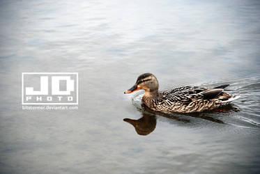 Ducky Swim by bitstormer