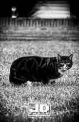 Morning Prowler by bitstormer