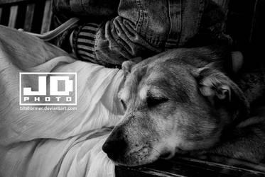 Restful Ollie by bitstormer