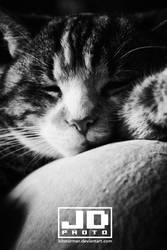 Snoozy I by bitstormer