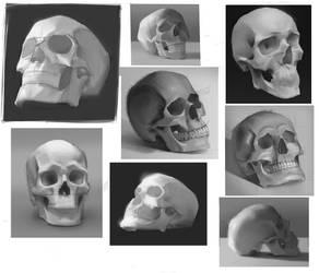 skull study by KuroRime