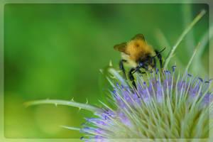 Thistle Bee by hayleyonfire