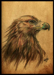 Eagle by Anhyra