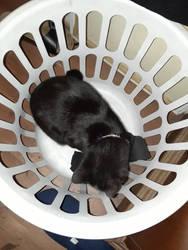 laundry day by PurplePhoneixStar