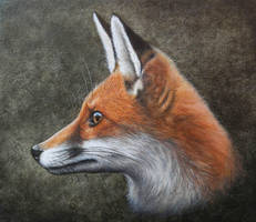 Red Fox Oil painting by painterman33
