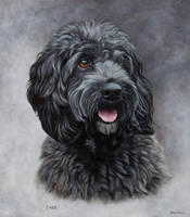 Cockapoo Portrait. Oil on canvas. 14 x 16. by painterman33