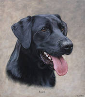 Labrador Portrait. Oil on canvas by painterman33