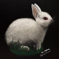 Albino Hare - Pencil Colors and Chalks by art-nattanon