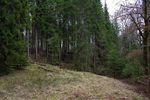 Forest IV - Stock Photo by KarvinenStock