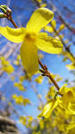 Here Comes Spring 57 by andotsiry