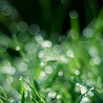 Dew II by andotsiry