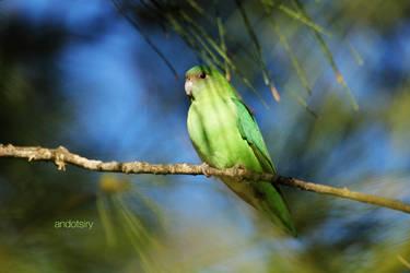 Lovebird by andotsiry
