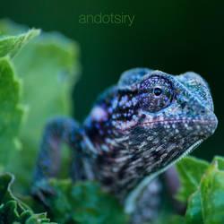 Camouflage Fail by andotsiry