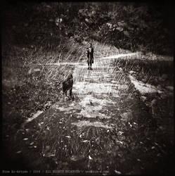 Azure Dog's Dream by Nina-Ai-Artyan