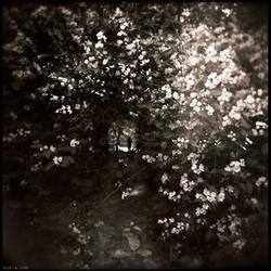 Throught Dream by Nina-Ai-Artyan