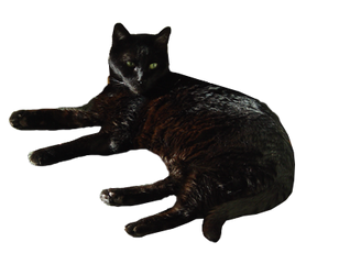 Black Cat - Transparent Background by Blackcatmagick41