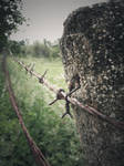Barbed wire by rachel93