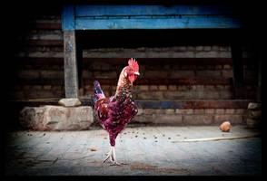 I Taste Like Chicken by abhimanyughoshal
