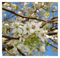 Springtime by jeepgurl8204