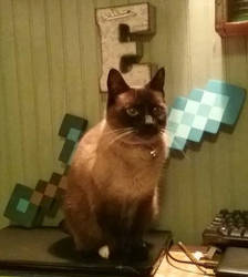 My Cat Ming by Erik-the-Okapi