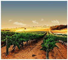 Riverland Vineyards by J-Ro-20