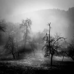 Valley by ulivonboedefeld