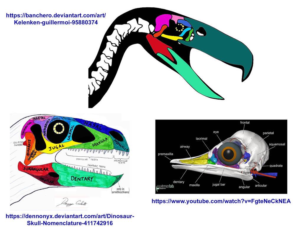 Terror Bird Skull Anatomy Is It Right By Codylake On Deviantart