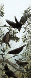 Blackbirds and olive branches by Nivalis70