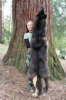 A Wolf - Bear Hybrid?! by lupagreenwolf