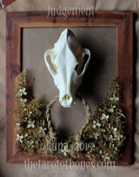 Tarot of Bones Original Assemblages For Sale! by lupagreenwolf