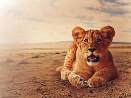 Lioncub by barbranz