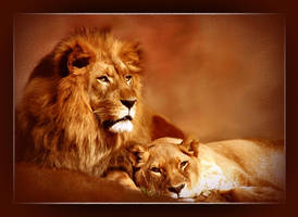 lions by barbranz