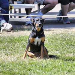 A less exciting moment during the dog show by sequential