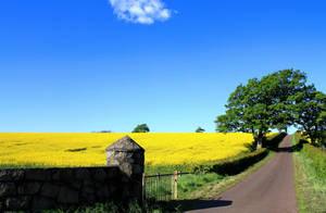 Sunshine Harvest by LastGlance