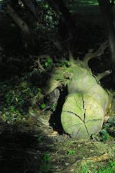 Tree Stump 2 by Dori-Stock