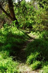 Pathway by Dori-Stock