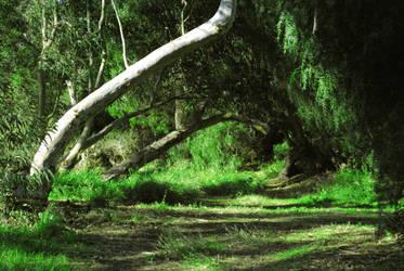 Park Trees 2 by Dori-Stock