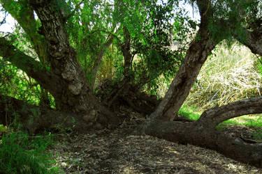 Park Trees 3 by Dori-Stock