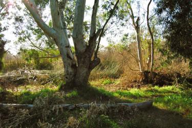 Park Trees 4 by Dori-Stock