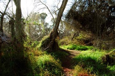 Park Trees 5 by Dori-Stock