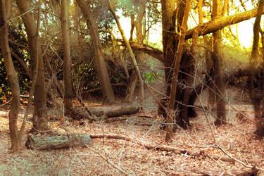 Dead Forest by Dori-Stock