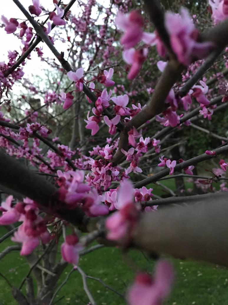 Blooming buds by DarkRedTigr